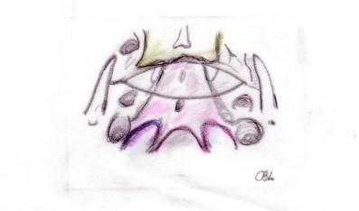 insertion membrane pharyngo basilaire
